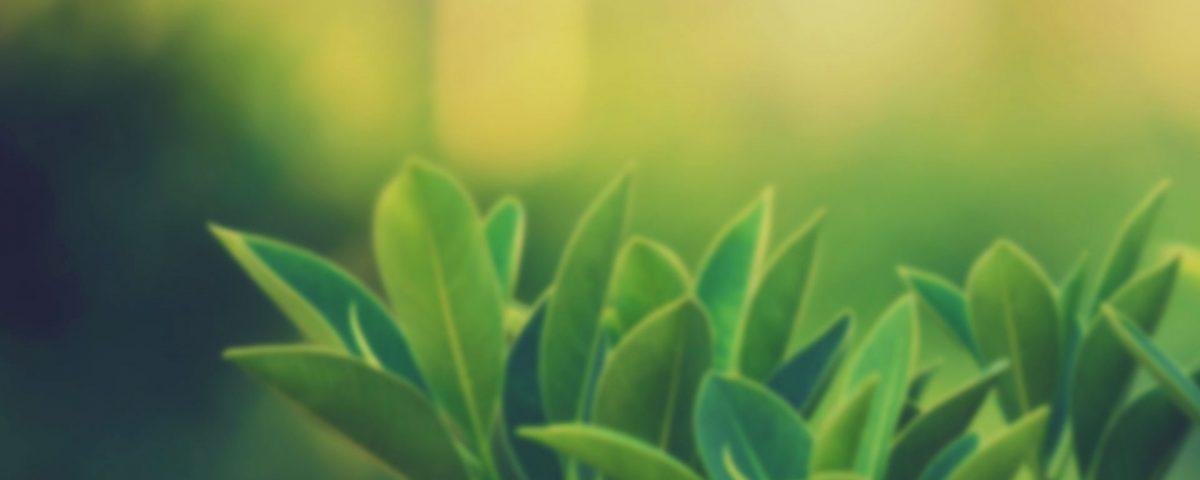 lupusa-karşı-yararlı-bitkiler-nelerdir