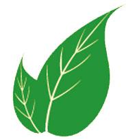 lupusa-karşı-yararlı-gelen-bitkiler